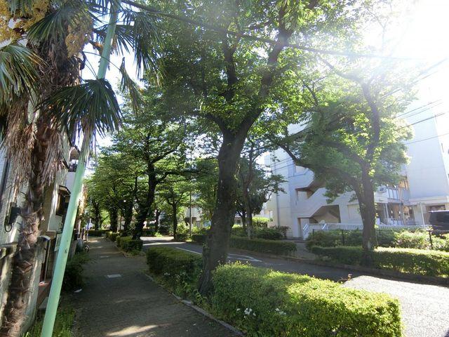 日々の帰り道やお散歩など、やさしい光が差し込む桜並木です。
