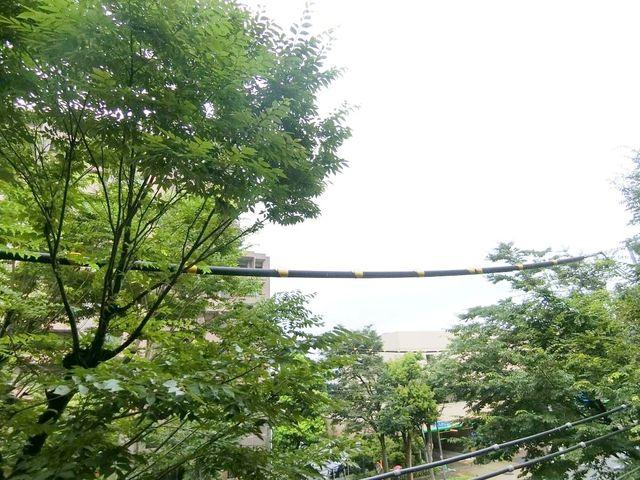 緑豊かな眺望は変えることのできない資産価値です。前面には桜の木が植えられておりますので、春はお部屋からお花見も楽しめます。